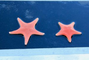 Two starfish on gunnel of boat
