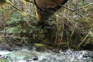 Fallen log across stream, Vancouver Island